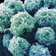 Embryonic Stem Cells, Sem Art Print