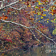 Fall Along West Fork River Art Print by Thomas R Fletcher