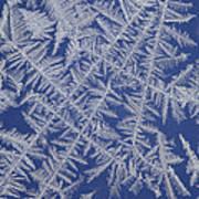 Frost On A Window Art Print