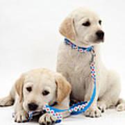 Goldidor Retriever Puppies Art Print by Jane Burton