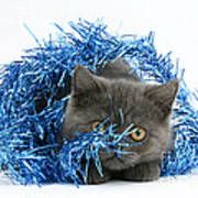 Kitten With Tinsel Art Print