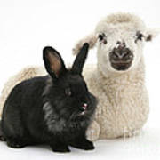 Lamb And Rabbit Art Print