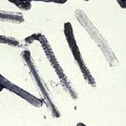 Marburg Virus, Tem Art Print