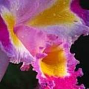 Orchid Rainbow Art Print