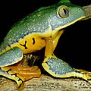 Splendid Leaf Frog Art Print