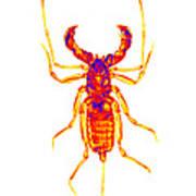 Whipscorpion X-ray Art Print