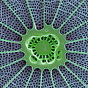 Diatom, Sem Art Print