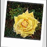 Flowers Flowers And Flowers Art Print
