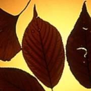 5 Autumn Leaves Art Print