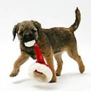 Border Terrier Puppy Art Print