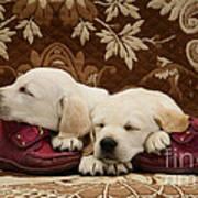 Goldidor Retriever Puppies Art Print