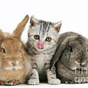 Kitten And Rabbits Art Print