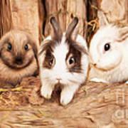 5 Little Rabbits Art Print