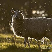 The Lamb  Art Print