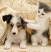 Kitten And Pup Art Print by Jane Burton