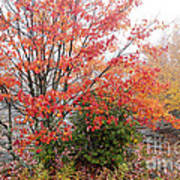 Fall Color Along The Highland Scenic Highway Art Print