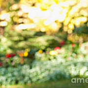 Flower Garden In Sunshine Art Print by Elena Elisseeva
