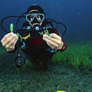 Invasive Seaweed Control Art Print