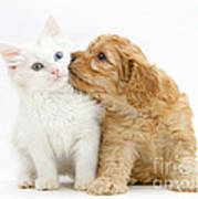 Kitten And Puppy Art Print