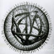 Measles Virus Print by Omikron