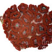 Fluorescent Coral In White Light Art Print