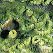 Hard Coral Art Print