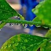 Raindrops On Leaf Art Print