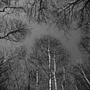Trees In Epping Forest Art Print