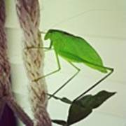 Instagram Photo Art Print