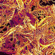Blood Vessels, Sem Art Print