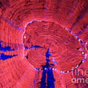 Fluorescent Coral In Uv Light Art Print