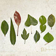 9 Leaves Art Print