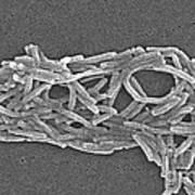 Legionella Pneumophila Art Print