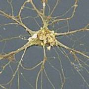 Nerve Cell, Sem Art Print