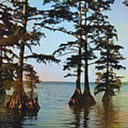 Reelfoot Lake Art Print