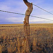 A Barbed Wire Fence Stretches Art Print