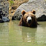 A Bear's Hot Tub Art Print