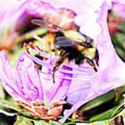 A Bees World Art Print