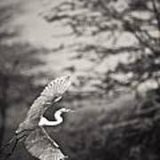 A Bird With A Large Wing Span Takes Art Print