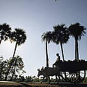 A Boy Rides On An Ox-drawn Cart Art Print