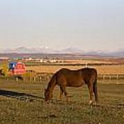A Brown Horse Grazing In A Field In Art Print by Michael Interisano
