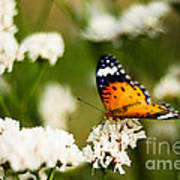 A Butterfly Affair Art Print