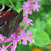 A Butterfly On The Pink Flower 2 Art Print