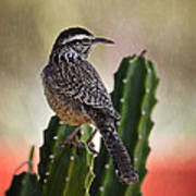 A Cactus Wren  Art Print