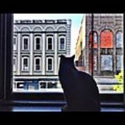 A Cat's View Art Print by Joan Meyland