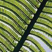 A Close View Of A Fern Art Print