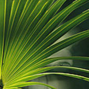 A Close View Of A Palm Frond Art Print