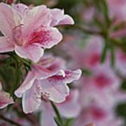 A Close View Of Pink Azalea Blossoms Art Print