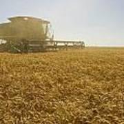 A Combine Harvester Works A Field Art Print
