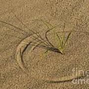 A Compass In The Sand Art Print